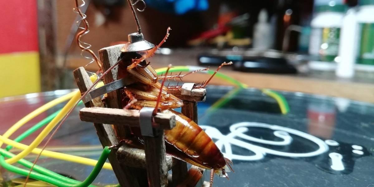 VIDEO.Electrocutó a una cucarachade una forma muy cruel y se ganó el odio de las redes