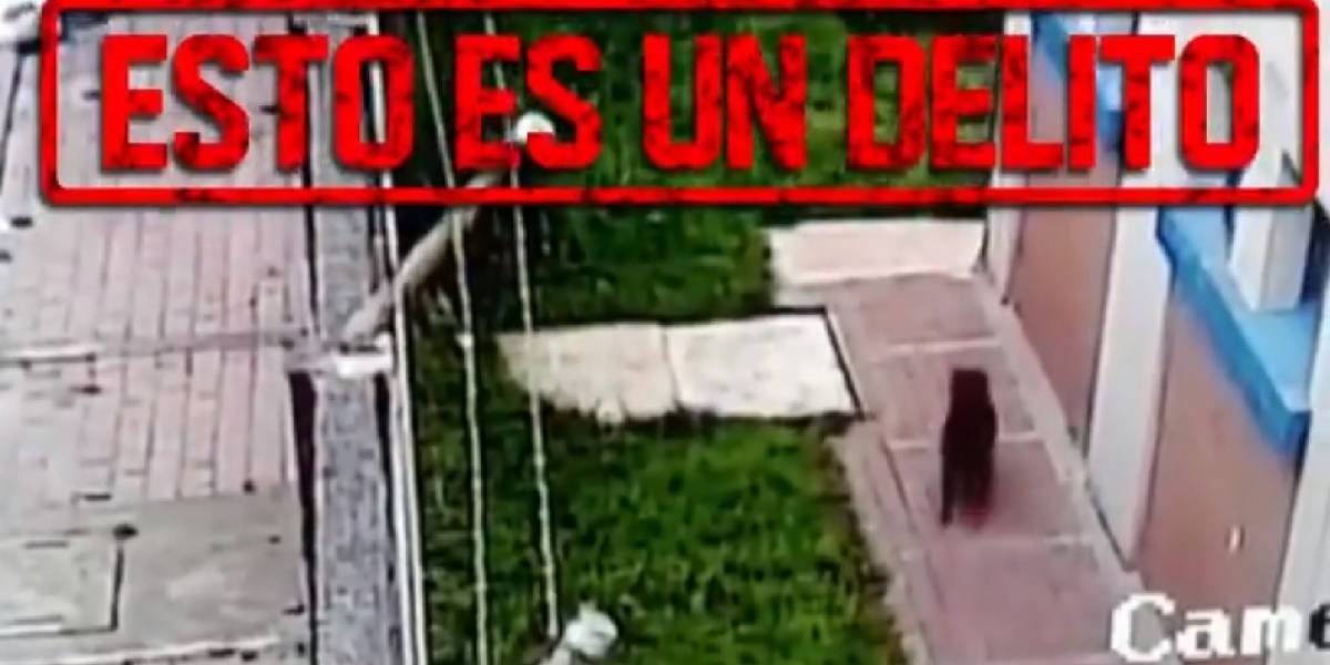 Video: aberrante caso de maltrato animal en Bogotá