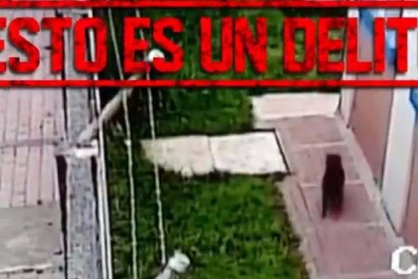 caso de maltrato animal en Bogotá