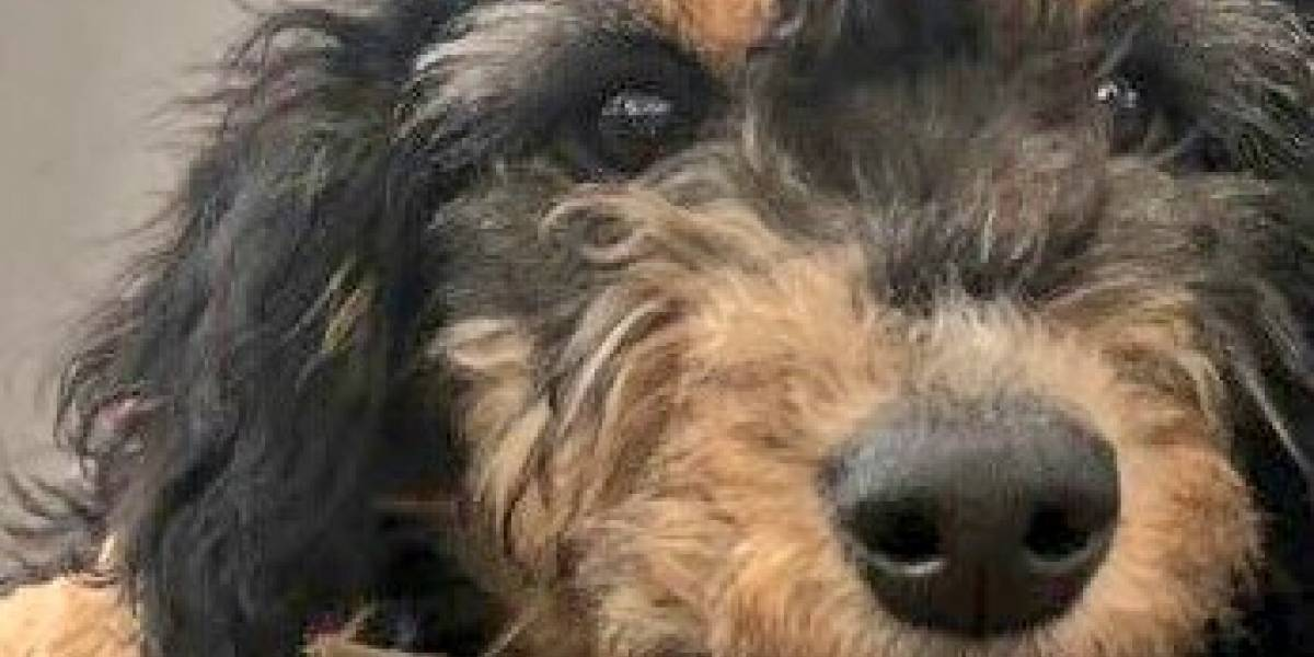 Fotos: Nube, víctima de maltrato animal en Bogotá busca una familia que la adopte