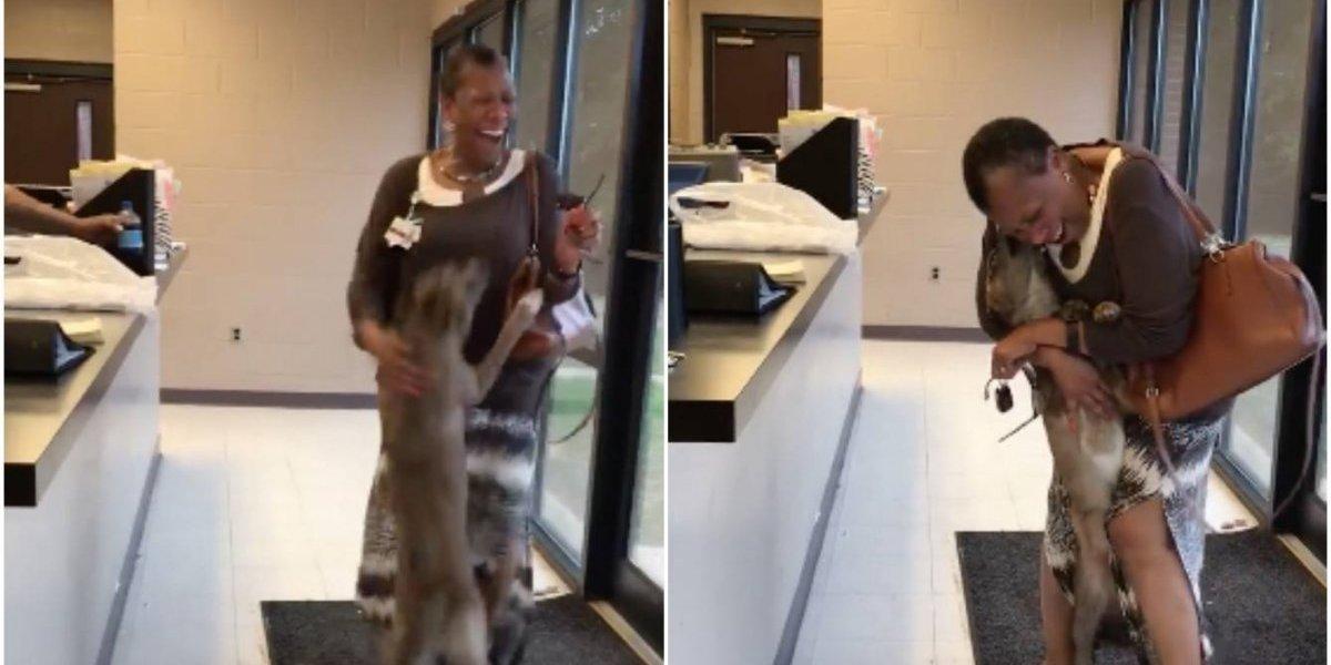 Puro amor: la emocionante reacción de un perro luego de ver a su dueña tras estar dos semanas perdido