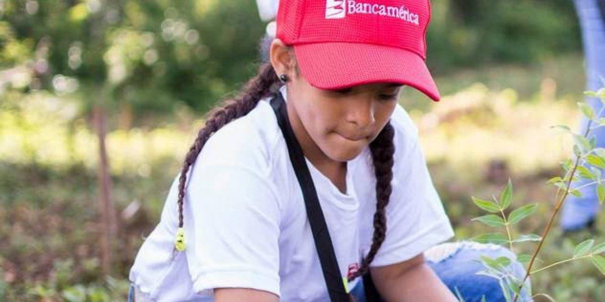 Bancamérica realiza cuarta jornada de reforestación