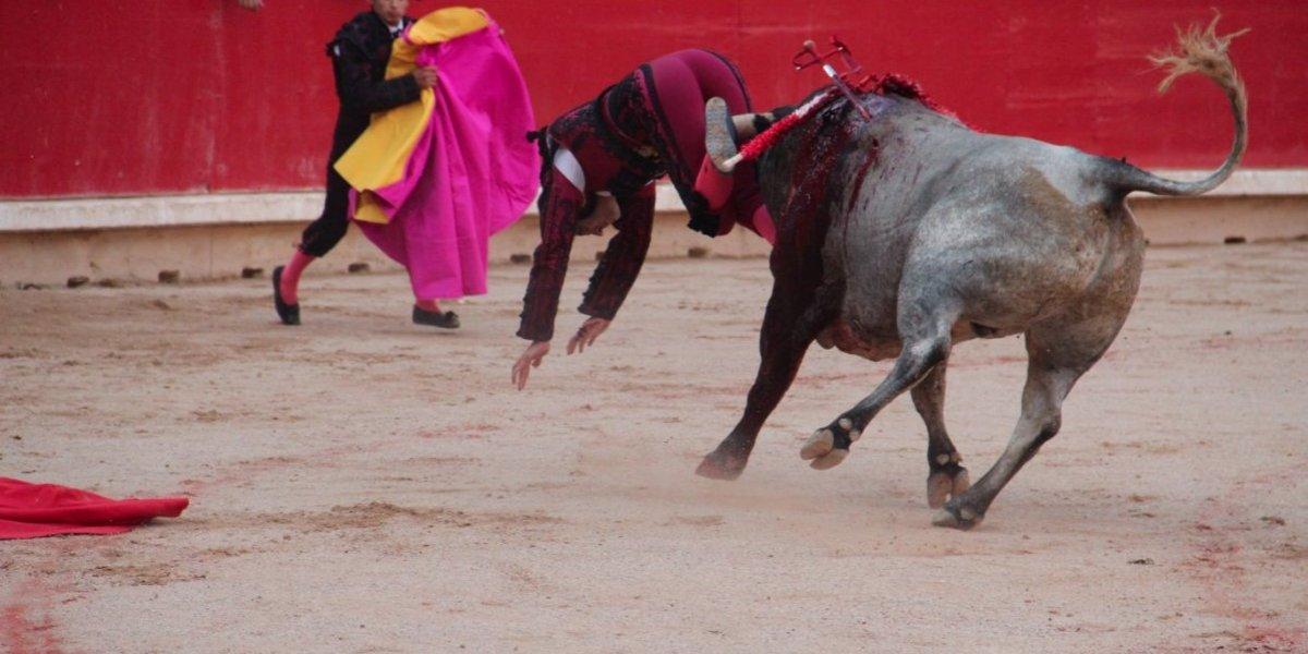 Torero español Javier Castaño resultó gravemente herido en el bajo vientre