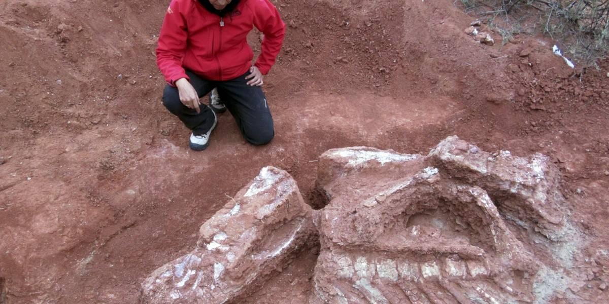 Se ha descubierto en Argentina una nueva especie de dinosaurio, el primero y más antiguo de los gigantes