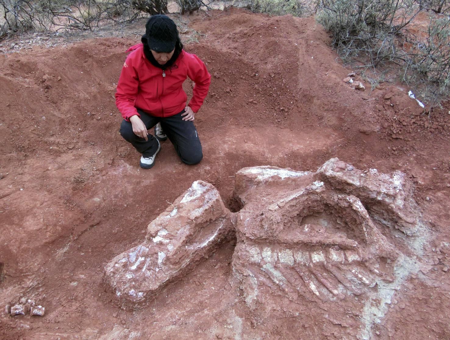 Se ha descubierto en Argentina una nueva especie de dinosaurio, el primero y más antiguo de los dinosaurios gigantes