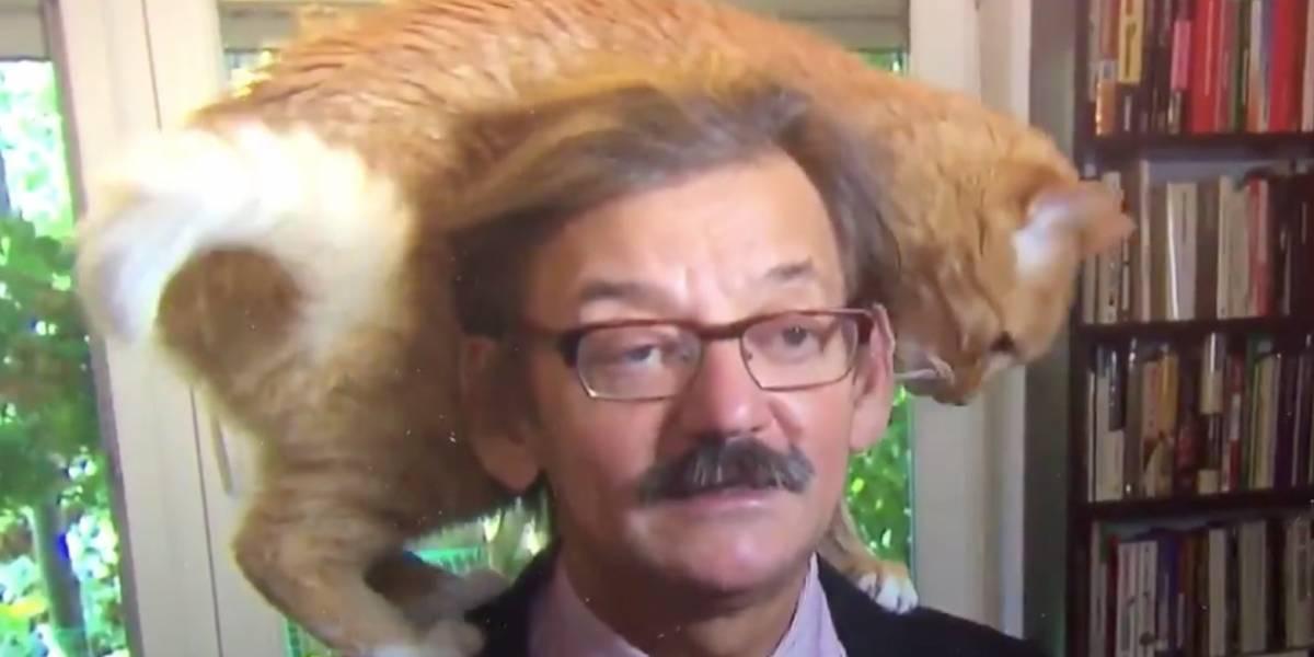 El mejor despacho en vivo del mundo: simpático gato quiso ser el centro de atención de una entrevista y se convierte en viral