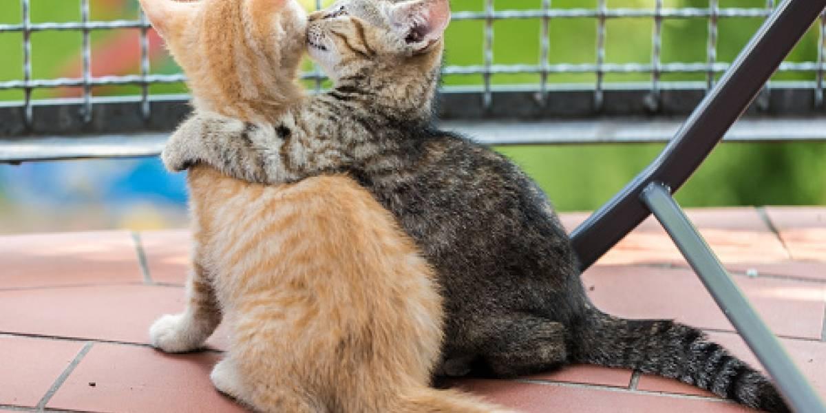 El video que hace llorar al mundo: gatito no abandona a su amigo muerto y transforma en viral tras adorable gesto que romperá tu corazón