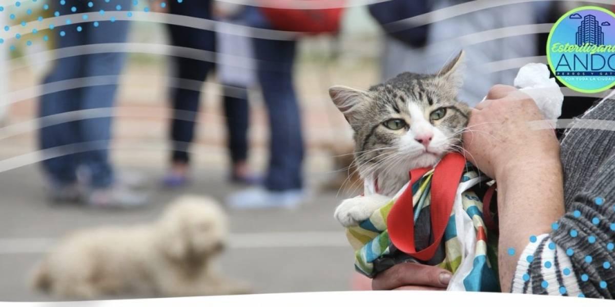 ¡Aproveche! El Distrito realizará esterilizaciones gratuitas para perros y gatos por toda la ciudad