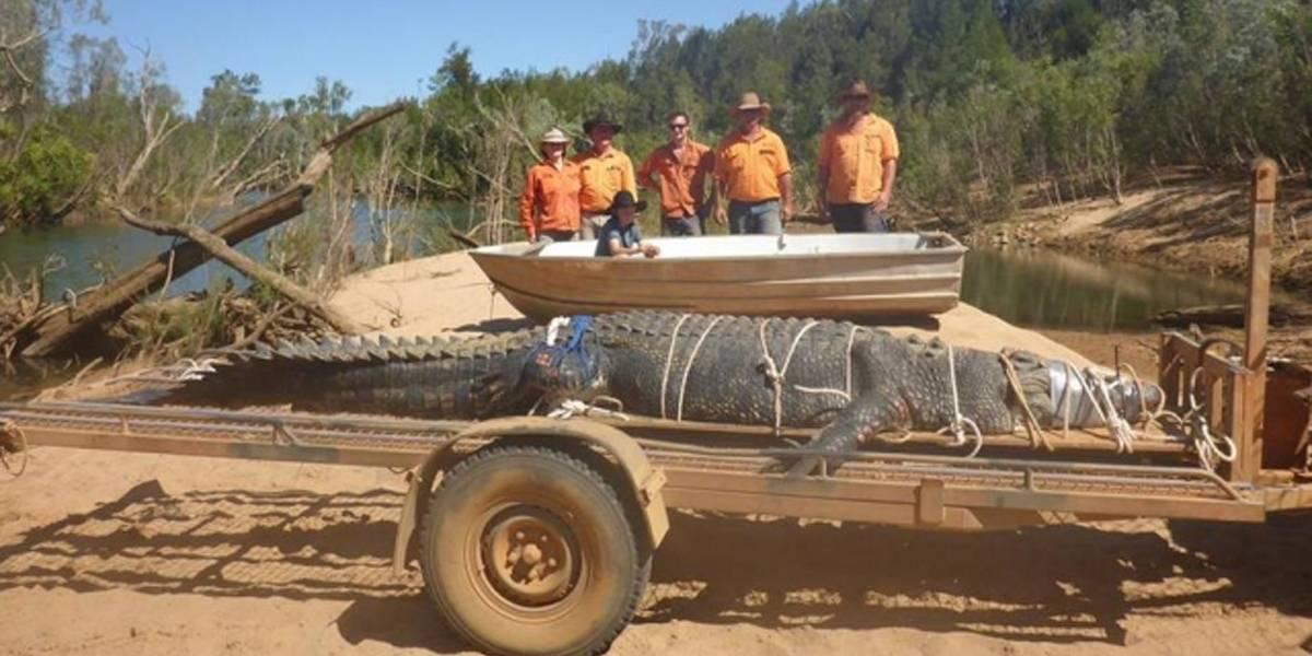 Crocodilo com mais de 4 metros é encontrado na Austrália