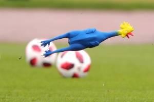 La gallina voladora / imagen: Getty Images