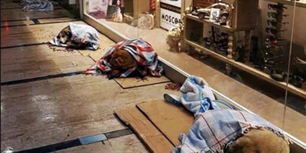 Shopping permite que cachorros de rua durmam lá dentro