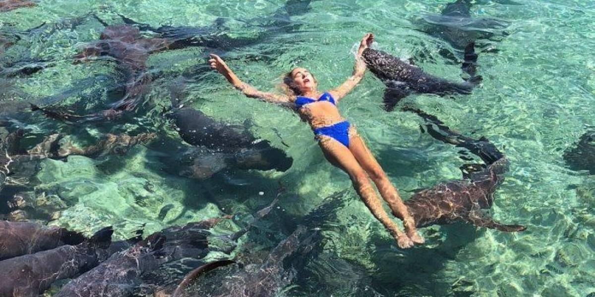 Namorado fotografa momento em que modelo é mordida por tubarão