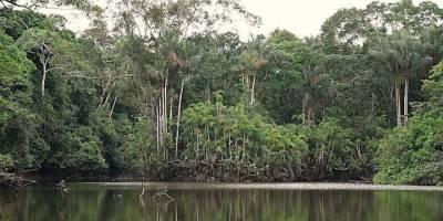 Petroamazonas gestiona licencia para explotar Ishpingo del ITT