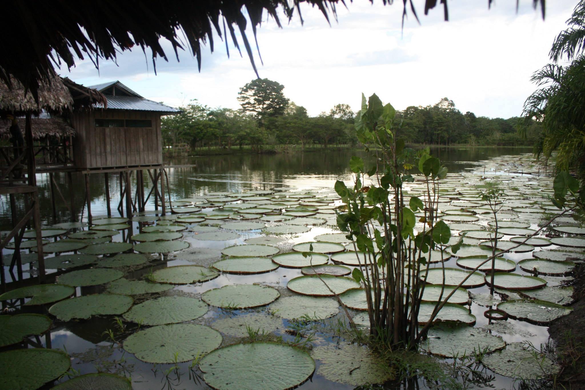 Estos son los logros en materia ambiental conseguidos los últimos ocho años por el gobierno colombiano