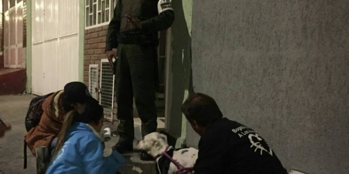Rescatan perrita pitbull, víctima de maltrato por su dueño en Bogotá