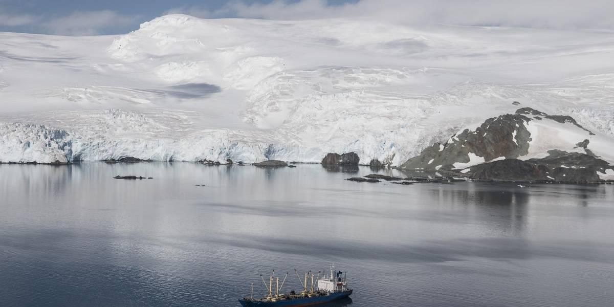 Antártica protegida: 85% de la industria de krill se comprometió a no pescar cerca de ecosistemas frágiles
