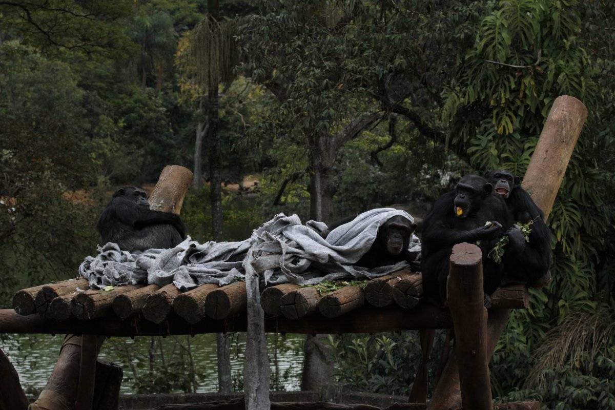Paulo Gil/Zoológico de São Paulo