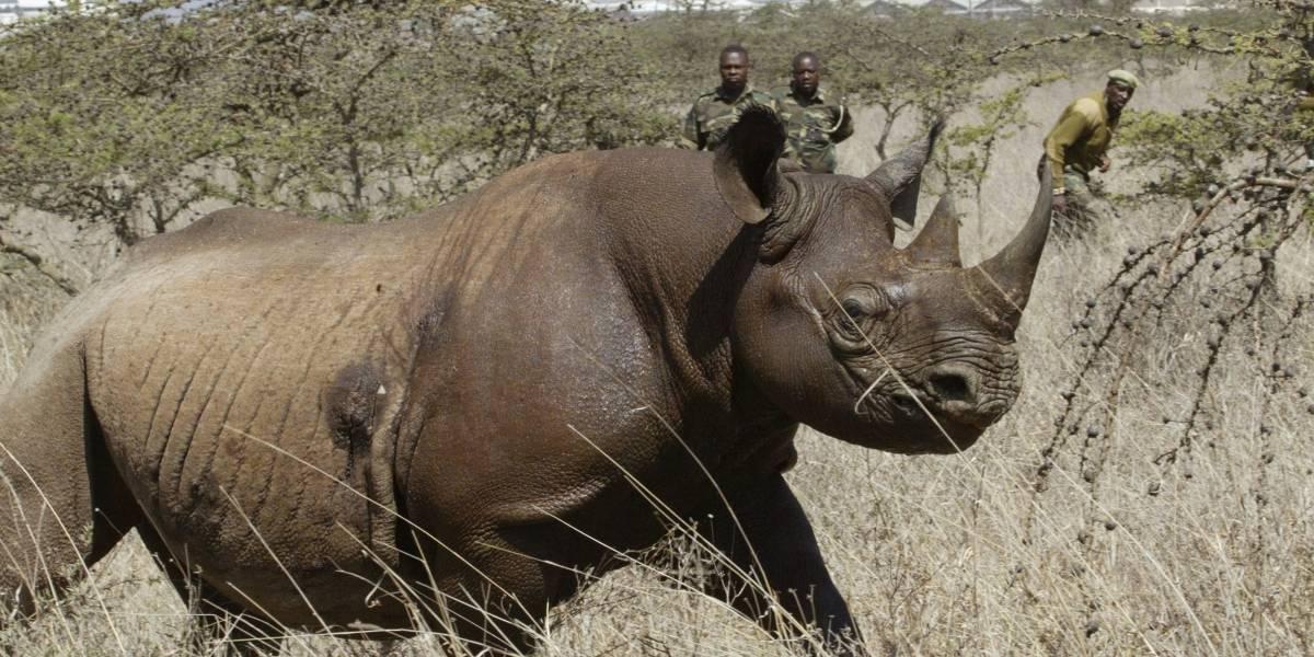 Mueren misteriosamente 8 rinocerontes en intento de traslado