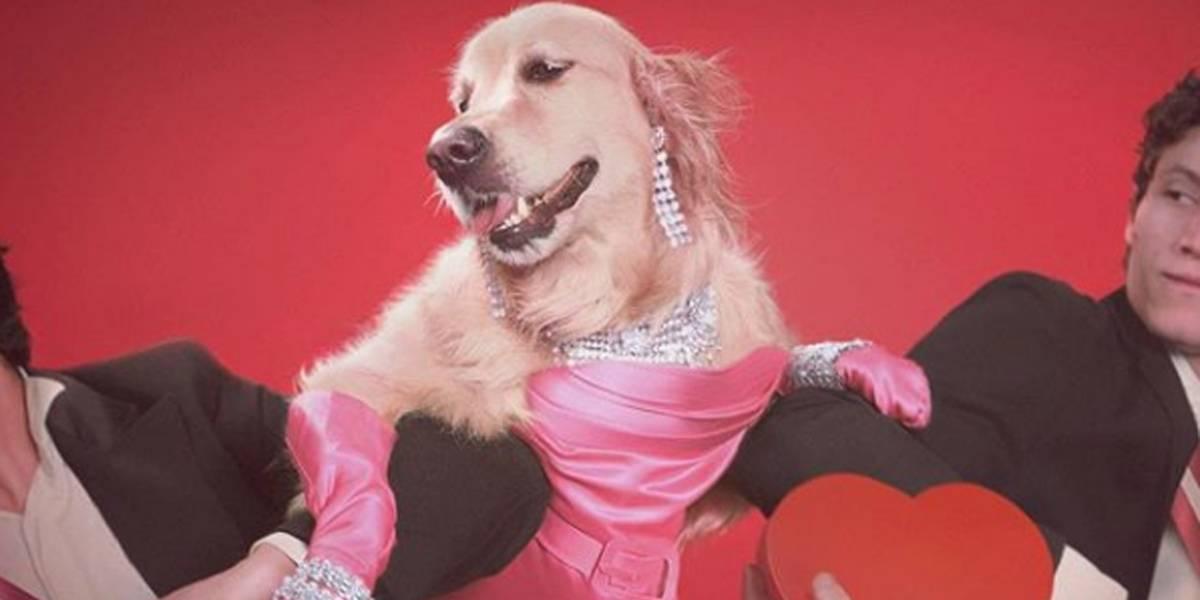 Cachorro faz sucesso no Instagram com releitura de fotos de Madonna