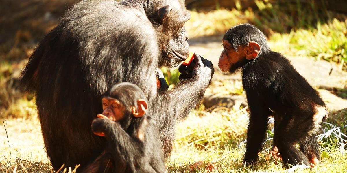 Frio chega ao auge e Zoológico de São Paulo tem até cobertor para os animais