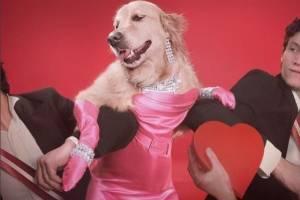 fotógrafo francês faz fotos do cachorro, Max, em poses clássicas de Madonna