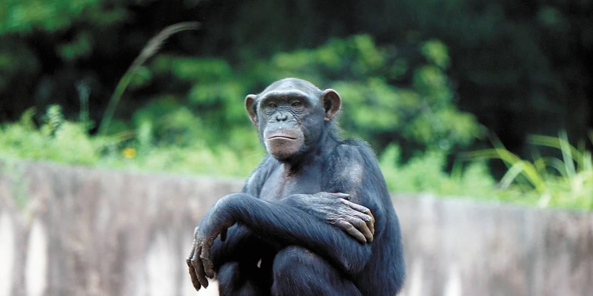Zoológico de São Paulo terá passeio monitorado e teatro ao ar livre