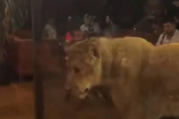 leona tras vitrina de bar