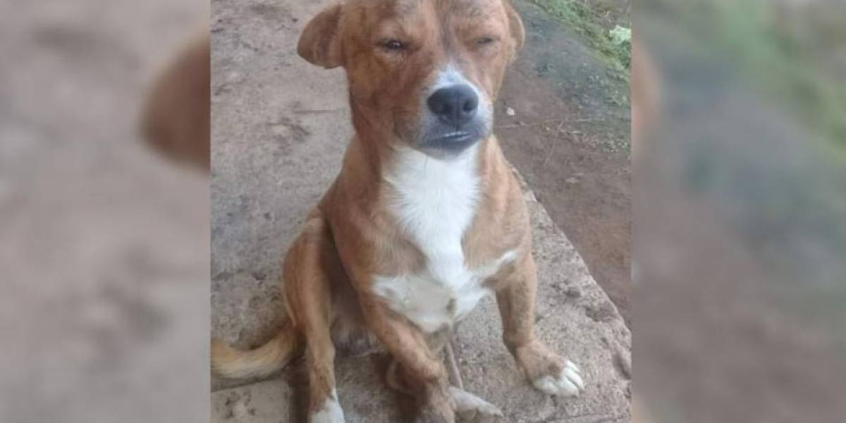 Indignación por joven que habría matado de una puñalada a perrito que le ladró a su paso