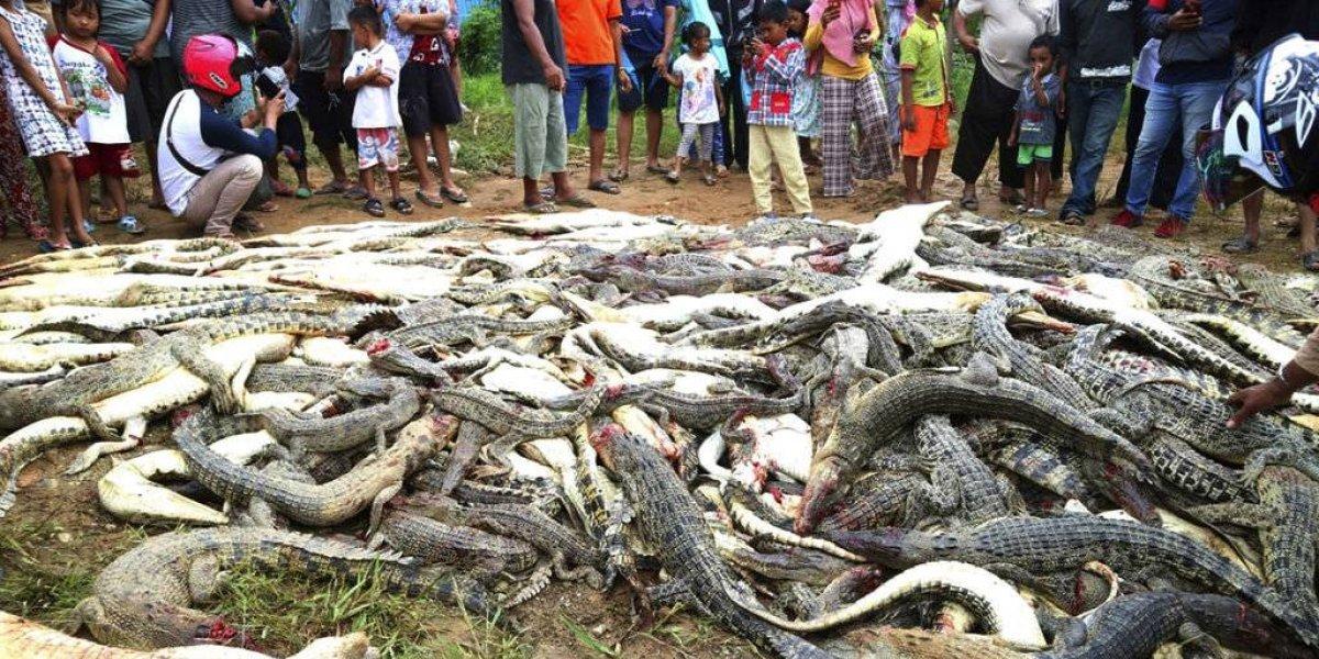 Crueldad sin límites: Una multitud mata a  casi 300 cocodrilos por venganza