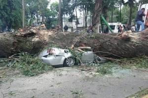 Árbol aplasta y mata a una familia en Naucalpan