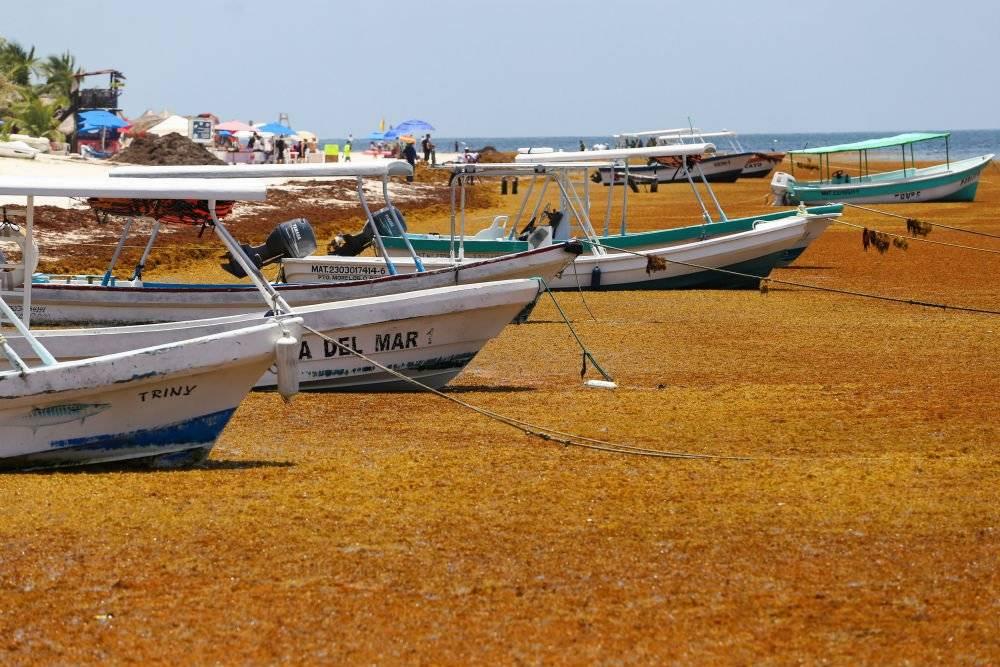 Las aguas de 13 playas se han pintado de tonos amarillos y anaranjados Foto: Cuartoscuro