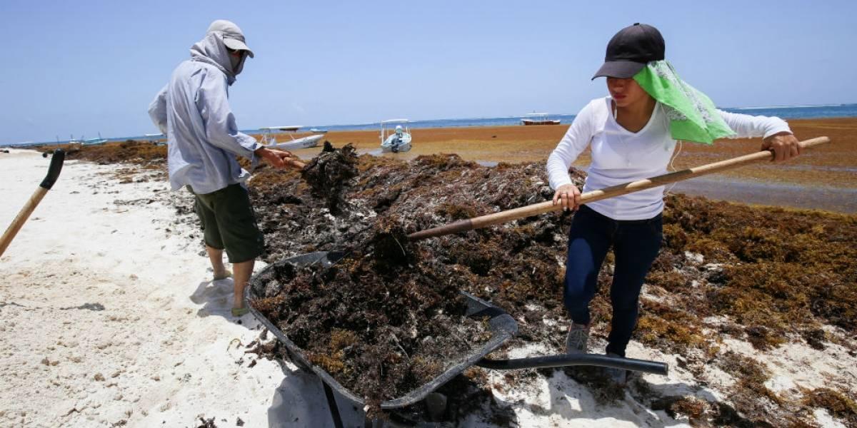 UNAM ayudará a combatir el sargazo en Quintana Roo
