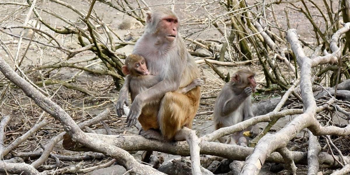 Isla de los monos se convierte en reserva científica por mandato de ley