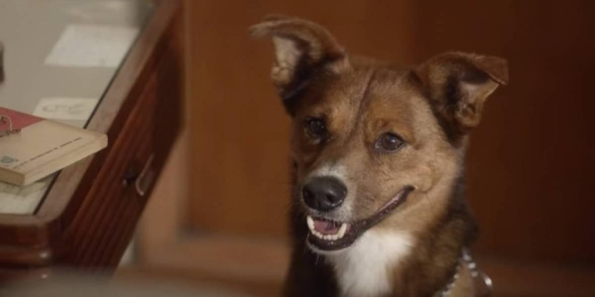 """""""El hombre y el perro"""": el viral que conmueve al mundo con su emotivo mensaje y que te invita a ser donante de órganos"""