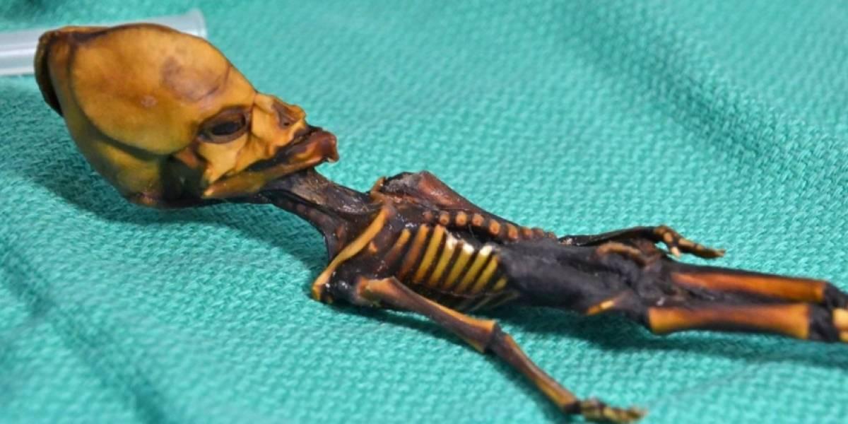 """Usaron una """"lógica defectuosa"""": nueva investigación sobre el """"esqueleto alien"""" de Atacama descarta mutaciones genéticas en la diminuta momia"""