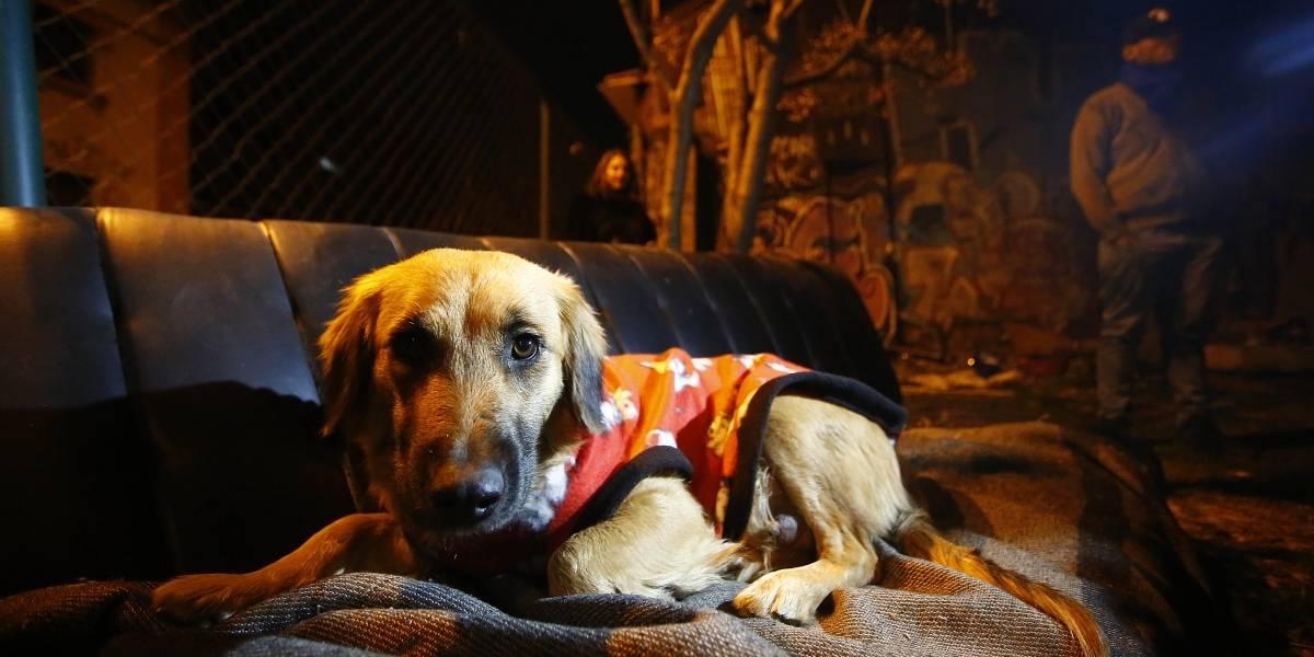 Código Azul especial: mascotas acompañan a dueños en los albergues y reciben atención veterinaria