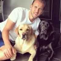 Futbolistas perros