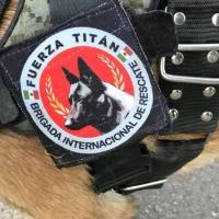 Titán, perro de rescate