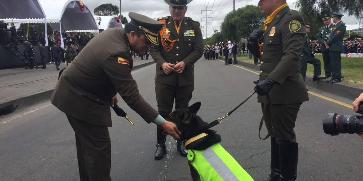'Sombra', la perra antinarcóticos que fue estrella del desfile del 20 de Julio