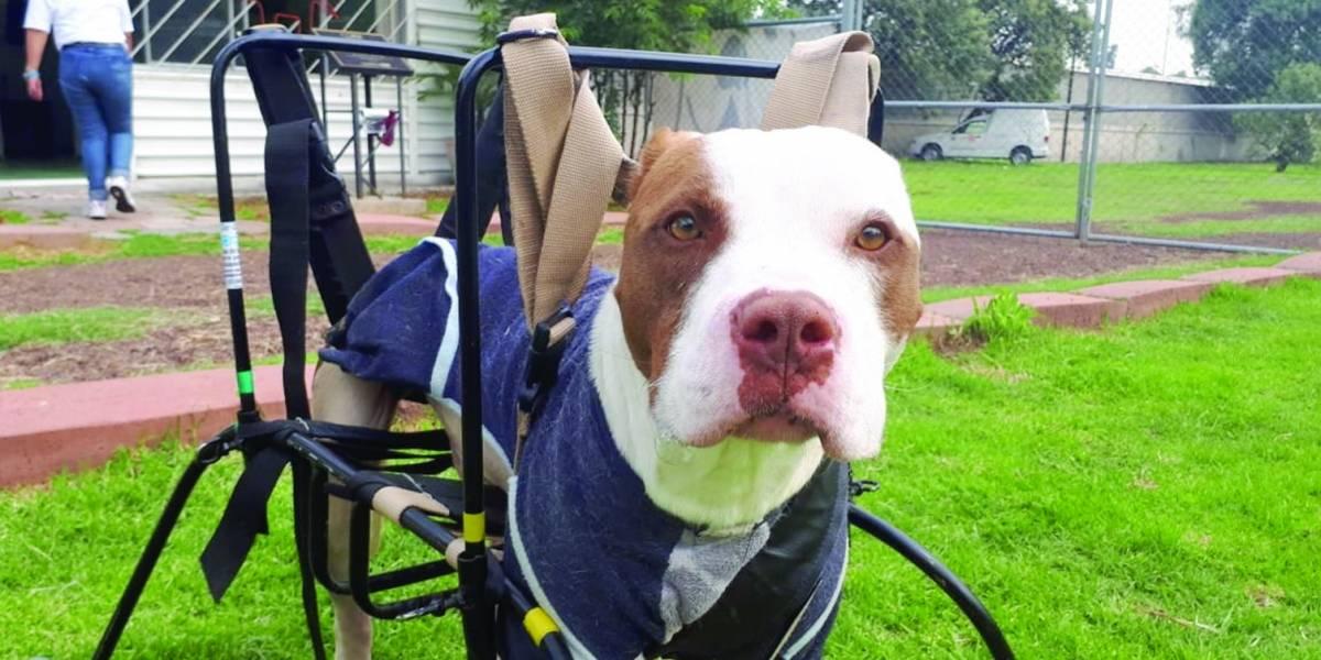 Capitalinos del norte, los que más dejan perros en el Metro