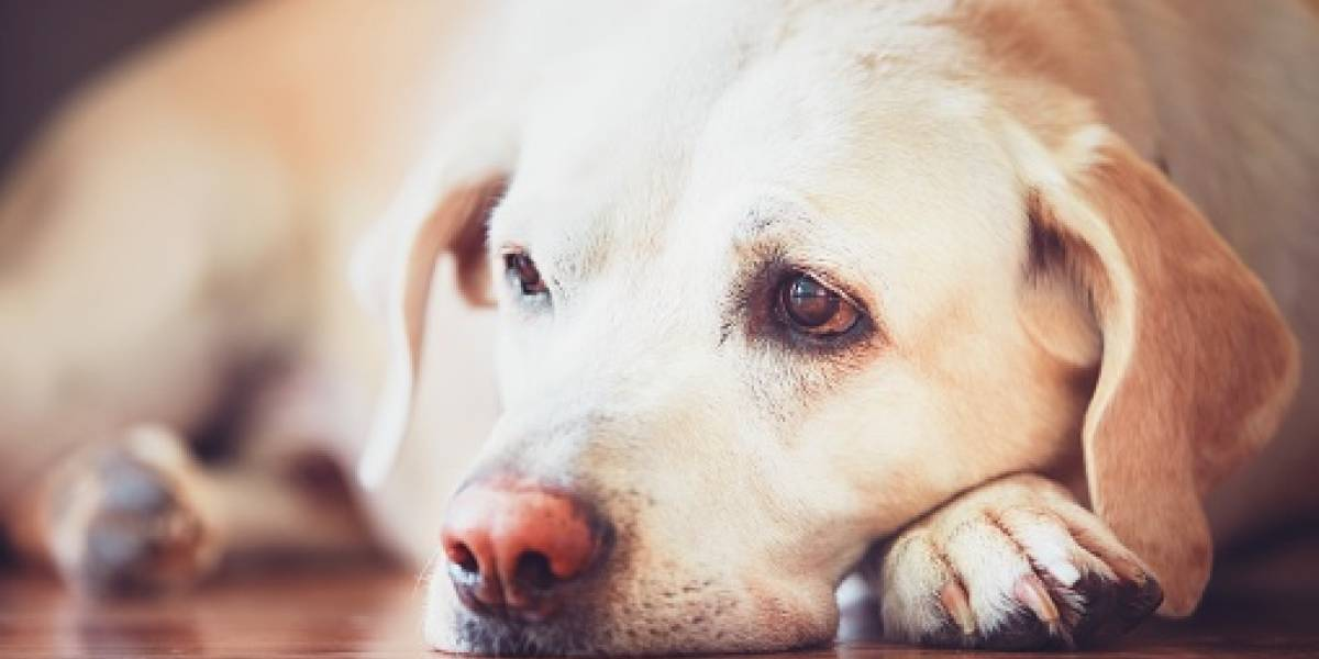 Quito: PAE denunció maltrato animal en Cumbayá