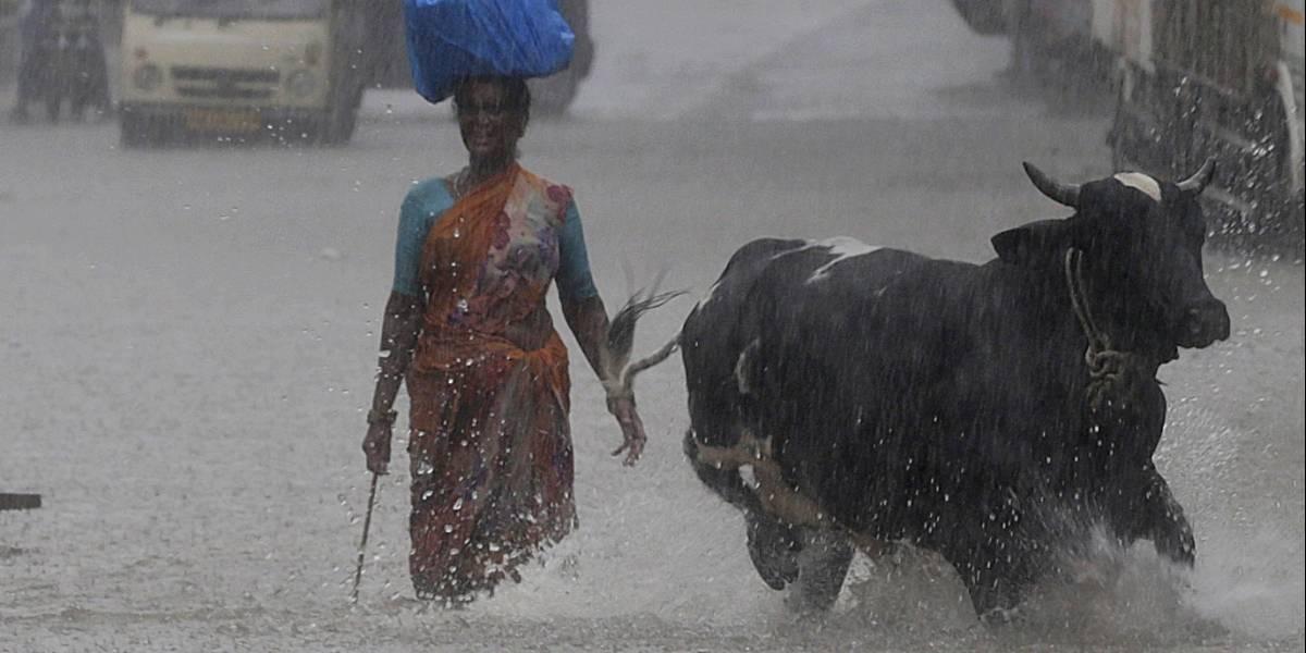 Linchan a hombre acusado de traficar vacas en la India