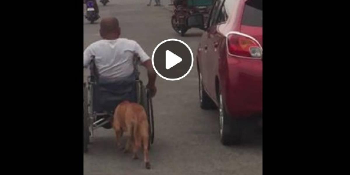 La heroica acción de un perro con su amo que le da la vuelta al mundo