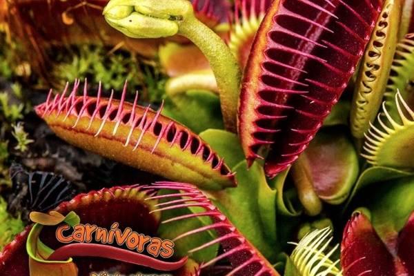 Exposición de plantas carnívoras en Bogotá