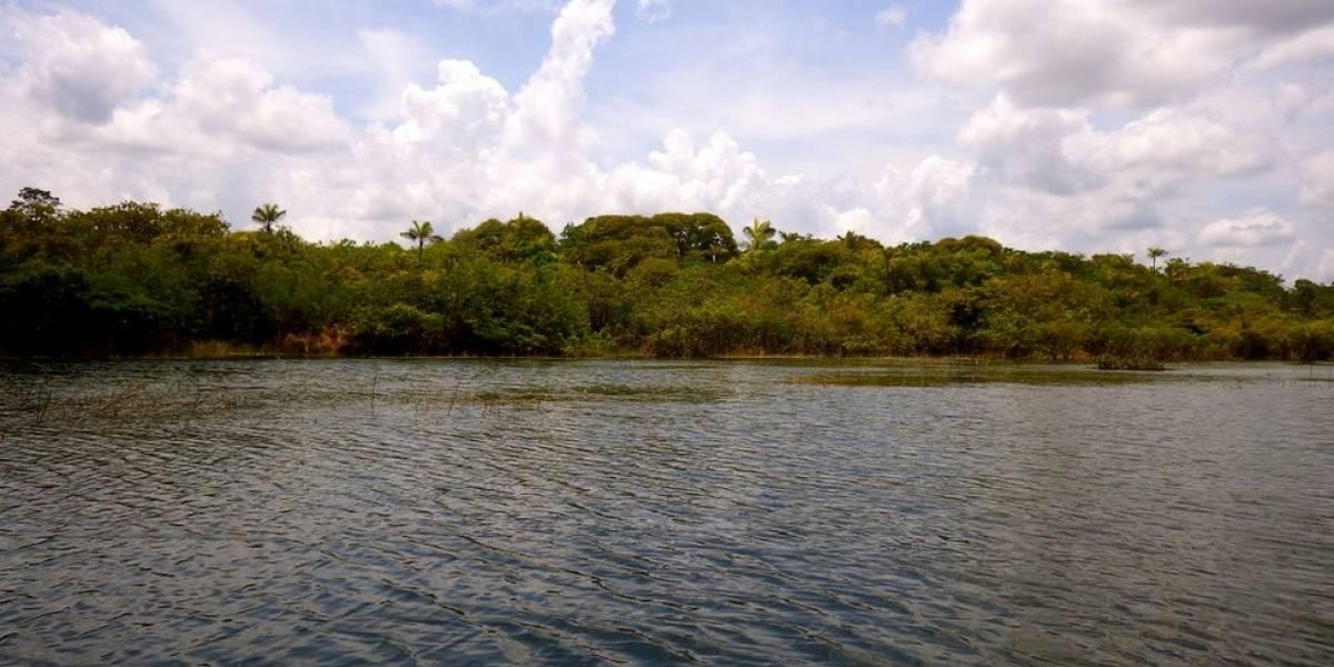 Cientistas descobrem indícios de que Amazônia tinha agricultura há 4,5 mil anos