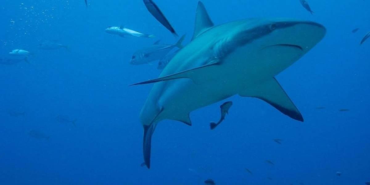 O impressionante momento em que um peixe devora um tubarão na Flórida
