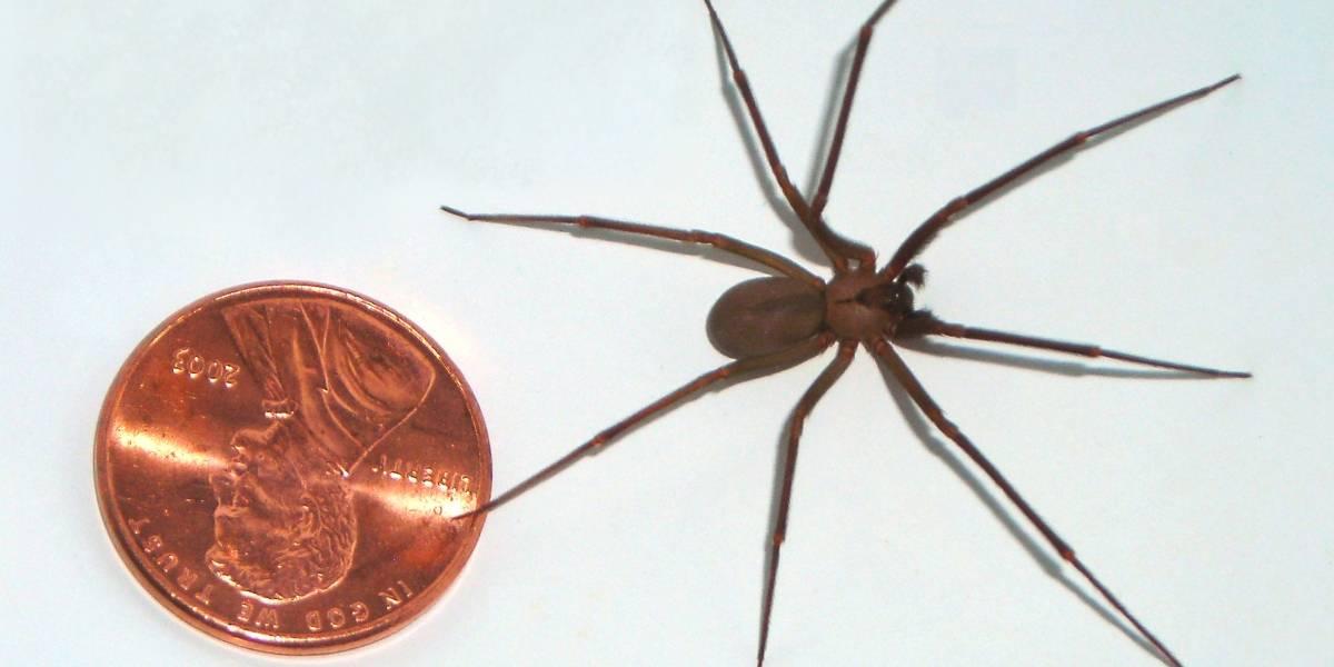 A una mujer le amputaron una pierna debido a la mordedura de una araña