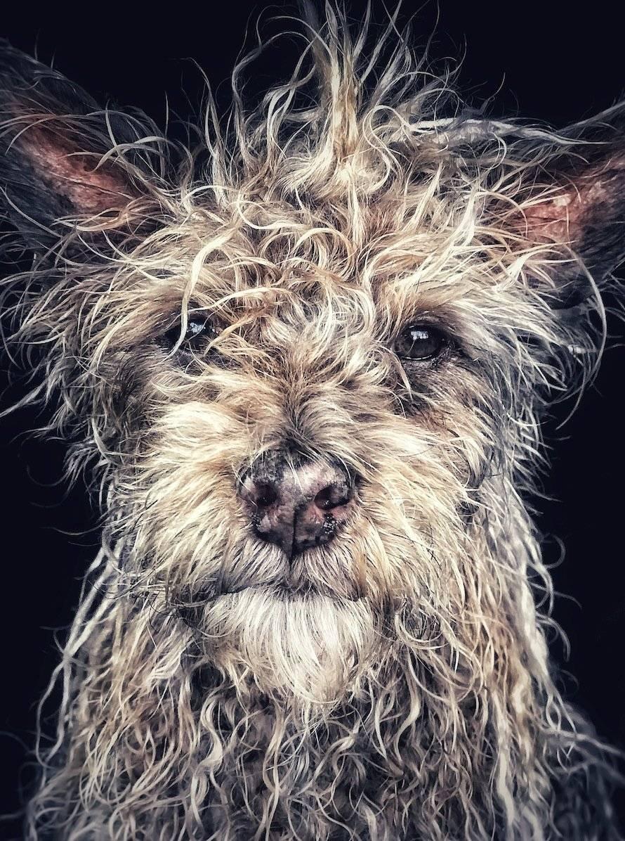 Django, viejo perro bebé