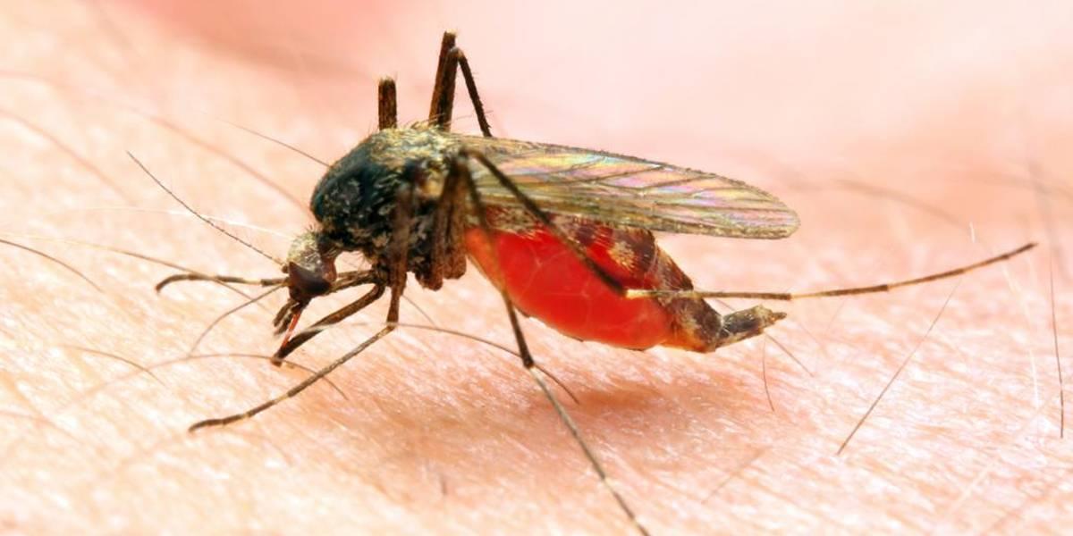 Malaria en Chile: Decretan riesgo sanitario en el norte del país por casos de la enfermedad