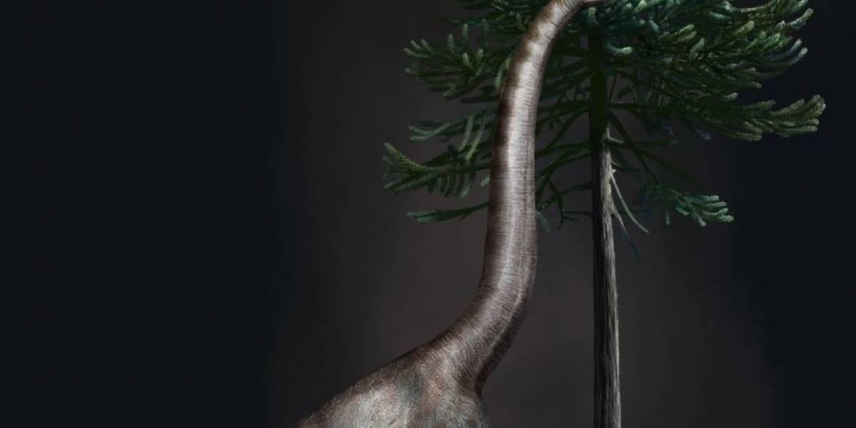"""Após 20 anos, revelado mistério de """"Bigfoot"""", a maior pata de dinossauro já encontrada"""